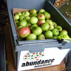 apples-in-abundance-trailer